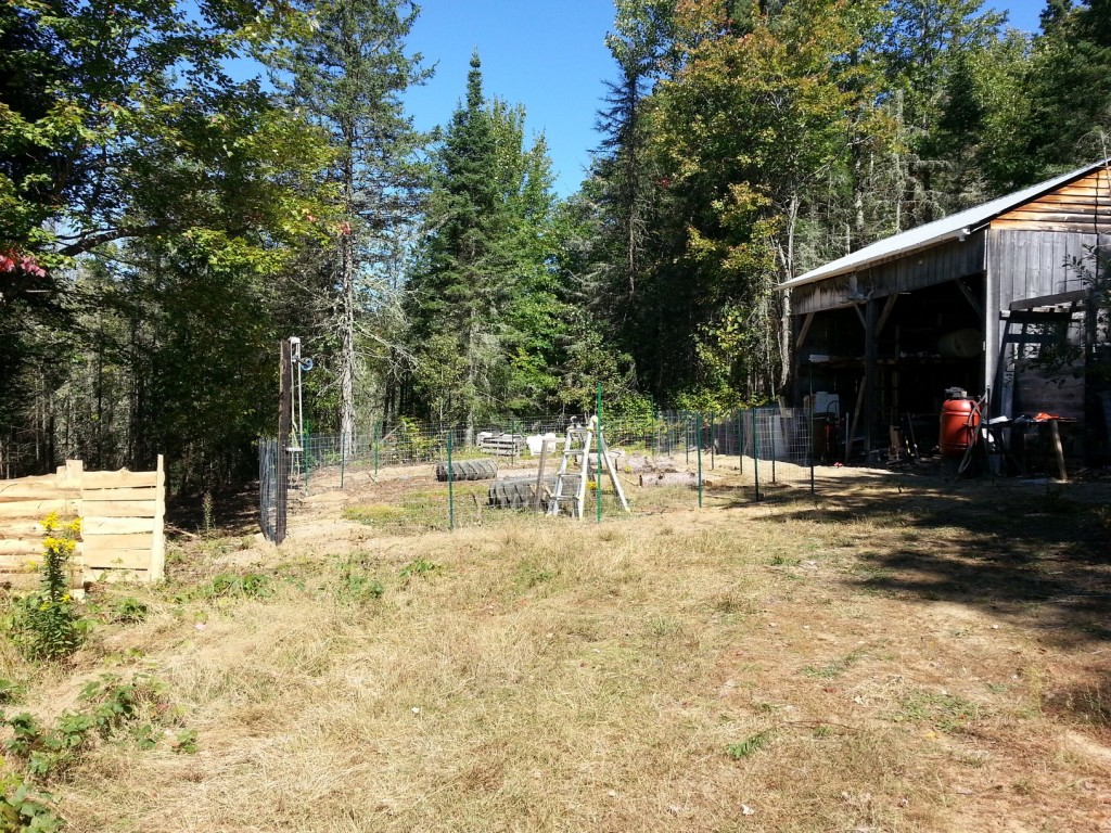 Fence all set. We will eventually extend some of it higher and draw wires to keep the deer out.