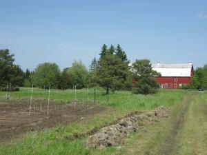 just-food-farm-d-deby-photo